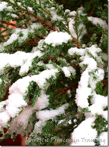 snow, vdaycards, primrose 2.10 066
