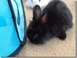 bunnies 4-13-2010 033