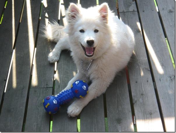 Charlie med beinet sitt