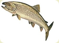 LakeTrout