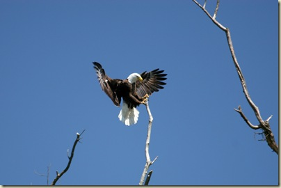 eagle1h_Bruce_Cole_Holston River