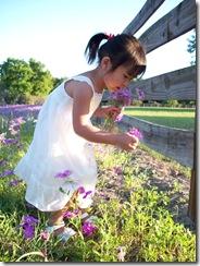 wildflowers 078