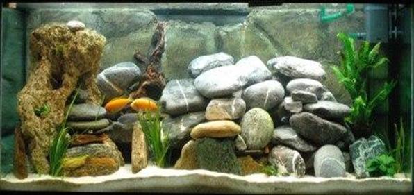 aquarium-tadepalligudem