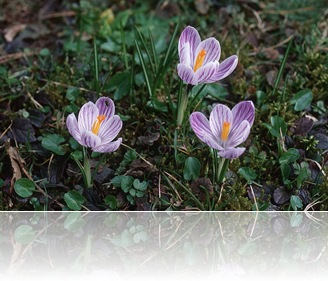 flower-blume-003