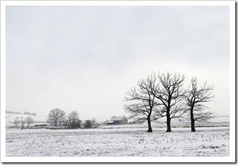 træer og sne