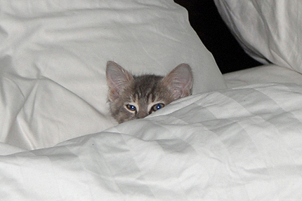 Hola y adios.  - Página 6 Gatito_cama2