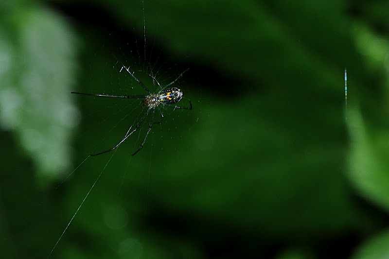 spider spinning web