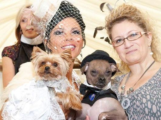 Britânica-gasta-mais-de-R$-50-mil-no-casamento-de-cadela-1