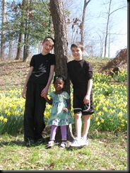 Daffodil gardens 038