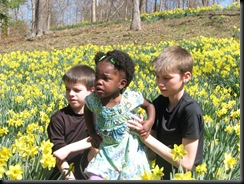 Daffodil gardens 023