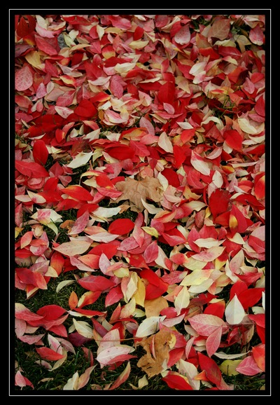 Fall carpet 2008 with border