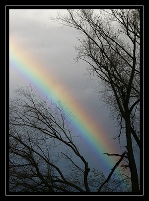 Persistent Rainbow