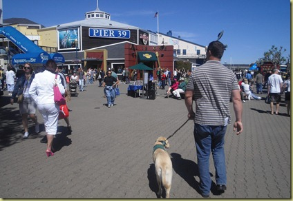 Reyna walking at Pier 39 with lots of people around her.  She is ignoring them...yay!