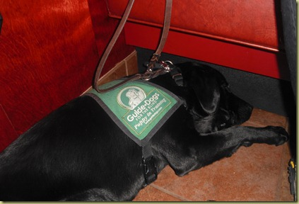 Sheba sound asleep underneath the table at Red Robin.