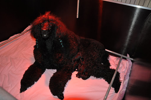 Puppies Heavenly en Zorbi 2011