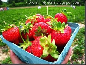 StrawberryFarm2