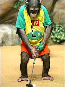 golf monkeys