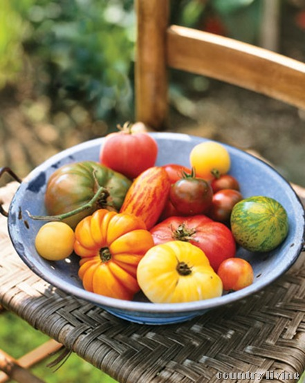 cl heirloom tomatoes