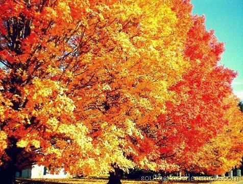 ayla fall 2
