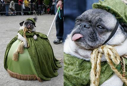 puglet o'hara halloween costume