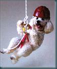 cane-attivo