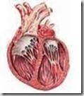 miocardiopatia-dilatativa
