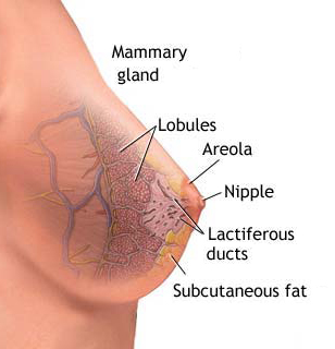 klar vätska från bröstet