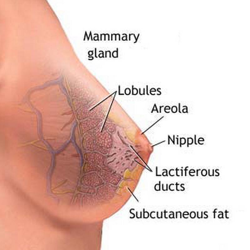bröstförändringar tidig graviditet