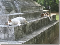 Dogs with temple fatigue