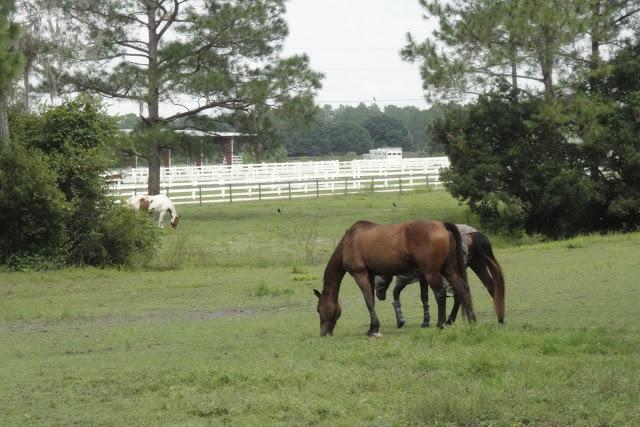 Equestrian Communities in Tampa Bay