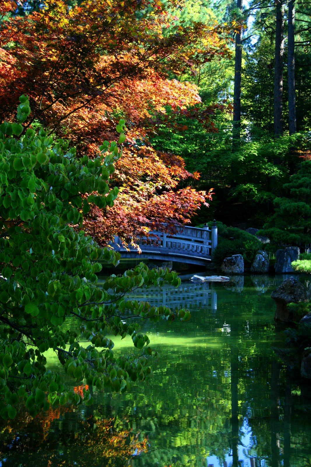 Serendipity and orchids manito city park for Nishinomiya tsutakawa japanese garden koi