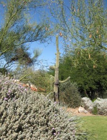 Arizona C