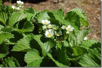 spring in the garden 006