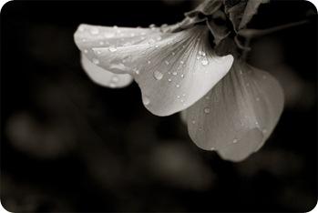 aún golpeada por la lluvia sigues siendo flor
