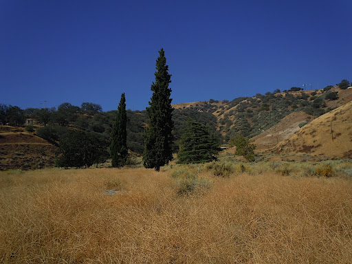 The cyprus trees here are one