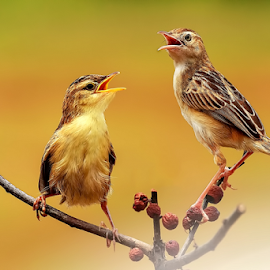 Duo Singers by Roy Husada - Animals Birds