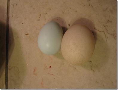 Eggs 005