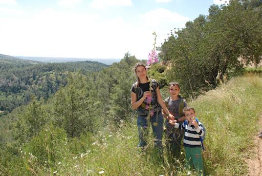 jerusalem hills