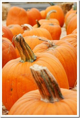 Orange You Glad I Said Pumpkin
