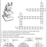 ACTIVIDADES DE CIENCIAS-11.jpg