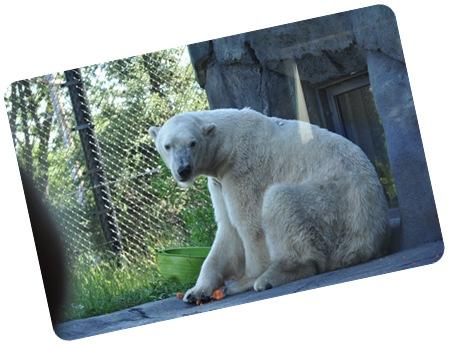 Como Zoo 050