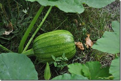 garden august 008
