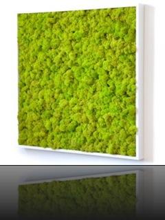 tableau-design-kandigreen-250