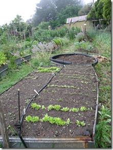Nov garden 2010 021