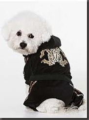 fashion dogs4