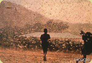 grasshopper locustss