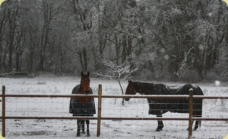 snowy horses