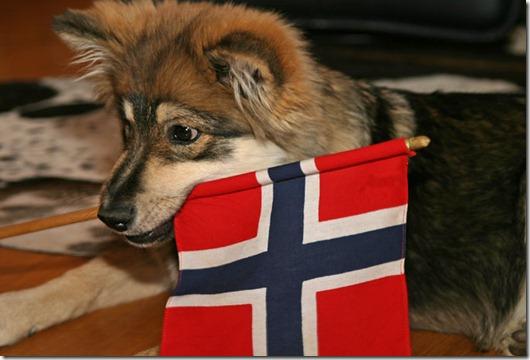 Dixie med flagg...