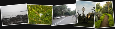 View BPT Garden