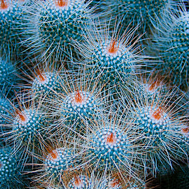 Cactus' by Clifford Krous - Nature Up Close Other plants ( plant, life, spikes, nature, needles, cactus )